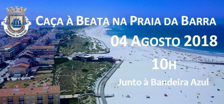 Caça à Beata na Praia da Barra